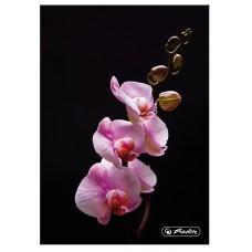 Книжка Herlitz записная А6 96 листов клетка, орхидея