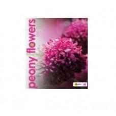 Тетрадь MagTaller А5 48 листов клетка, Peony flowers