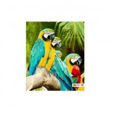 Тетрадь MagTaller А5 96 листов клетка, попугаи